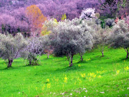 belmonte_calabro_img2