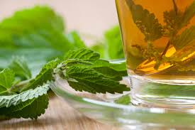 Stinging nettle tea, a good recommended remedy for prostatitis