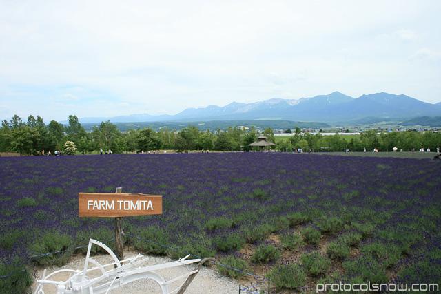 Farm Tomita Hokkaido Japan lavendar farm