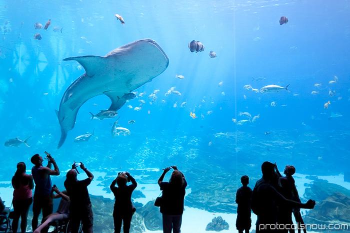 Atlanta Aquarium Ocean Voyager largest tank habitat whale sharks