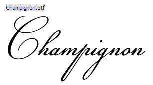 38 Calligraphy Fonts for Designers to Create Visually