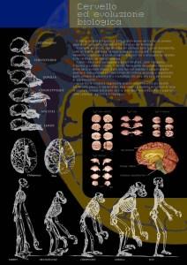 Cervello ed evoluzione