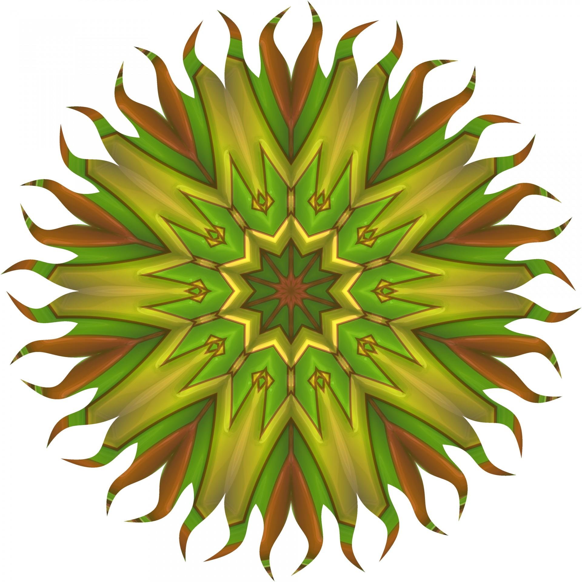 Fullsize Of Sun Star Plant