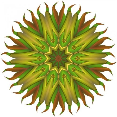Medium Crop Of Sun Star Plant