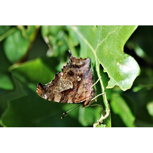 Medium Crop Of Butterfly Close Up