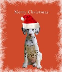 Small Of Dog Christmas Cards