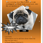 Missing/Found Pet Flyer Template