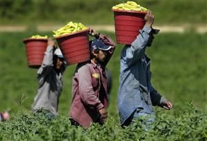 farmworkers-300x205