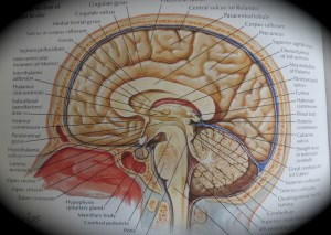Here is your brain. Or part of it, anyway. Mommy, PhD or otherwise, every