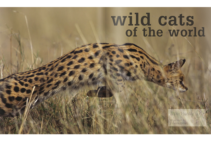 This jumping serval is part of the opening spread in Luke Hunter's Wild Cats of the World Book