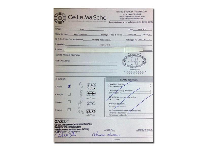 Certificato april opumidoro 4