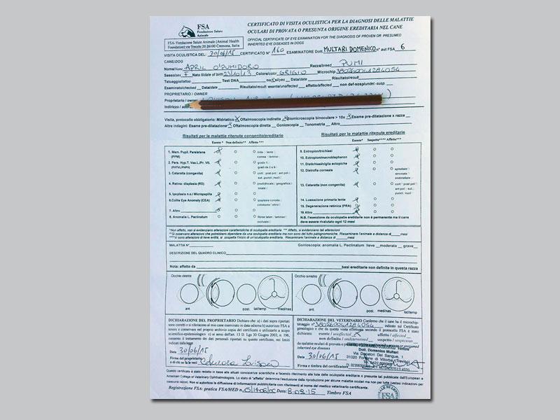 Pumi Certificato April 2