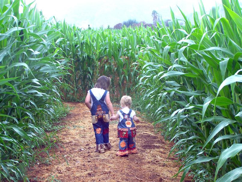 Farm-WalkingCornMaze