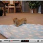 YouTube permite reproducir videos desde un punto personalizado