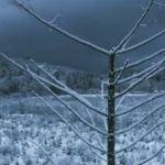 Drone volando sobre bosque nevado [Vídeo]