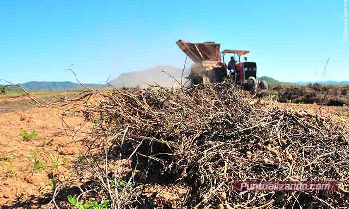cacahuate,Mocorito,cultivo