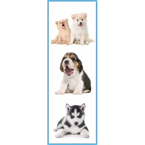 Medium Crop Of Clever Dog Names