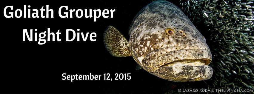 Goliath Grouper Night Dive (1)