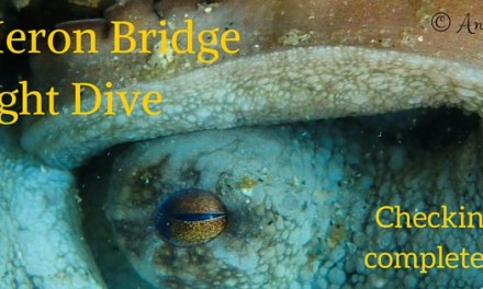 Blue Heron Bridge Night Dive: August 2nd
