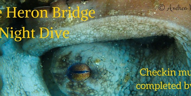 Blue Heron Bridge Night Dive: December 28th
