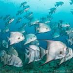 Deep Reef Diving South Florida