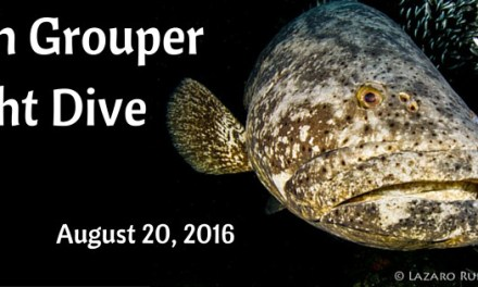 1-Tank Goliath Grouper Night Dive Aboard Sirena