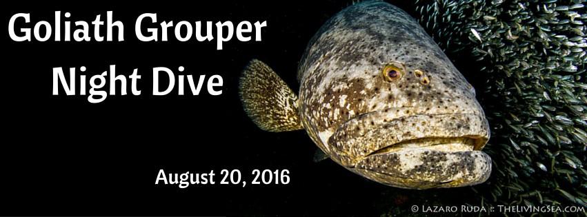 1-Tank Goliath Grouper Night Dive Aboard Sirena