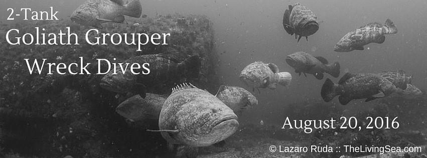2-Tank Goliath Grouper Wreck Dives Aboard Sirena