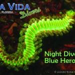 FEB 25: NIGHT DIVE AT BLUE HERON BRIDGE