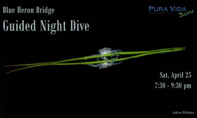 APRIL 25: NIGHT DIVE AT BLUE HERON BRIDGE