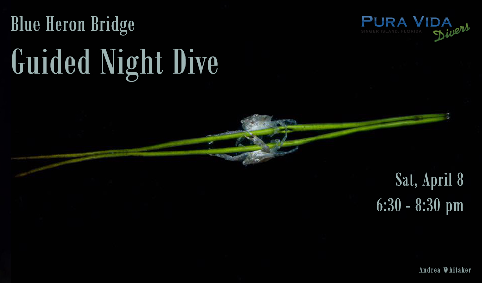 APRIL 8: NIGHT DIVE AT BLUE HERON BRIDGE