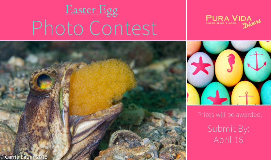 2017 EASTER EGG PHOTO CONTEST