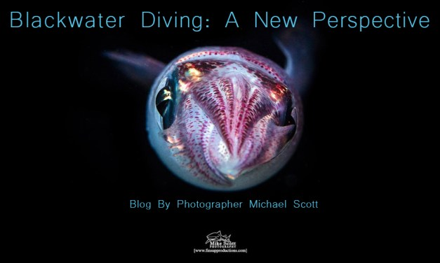 BLACKWATER DIVING: A NEW PERSPECTIVE