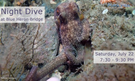 JULY 22 GUIDED NIGHT DIVE AT BLUE HERON BRIDGE