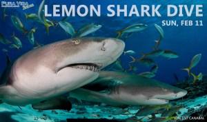 Lemon Shark Dive
