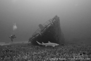 Diver practices passive observation on shark dives.