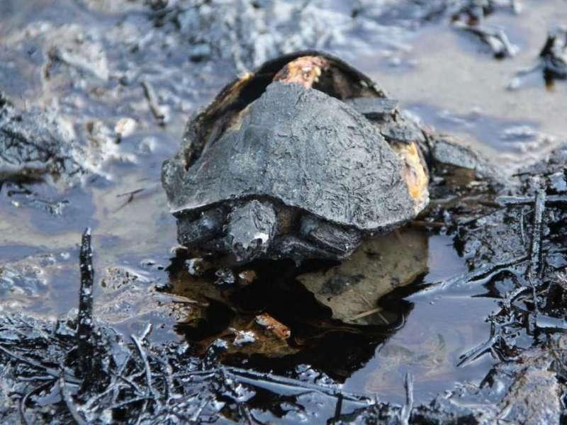 Nicaragua incendio daño ambiental. Foto Eddy López laprensa.com.ni
