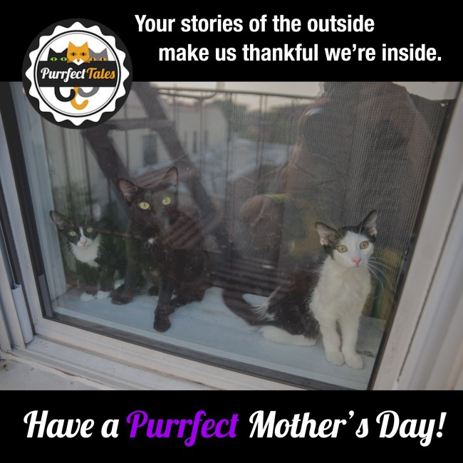 PurrfectMothersDay-1