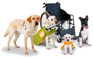 Four kinds of helping dogs sit around an empty wheelchair. They are variou