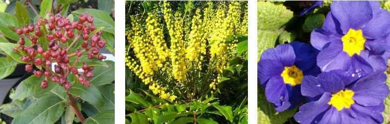 Top winter flowering plants to brighten up your garden in winter