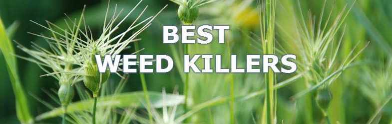 5 Best Weedkillers for 2017 – Learn which you need to get the job done