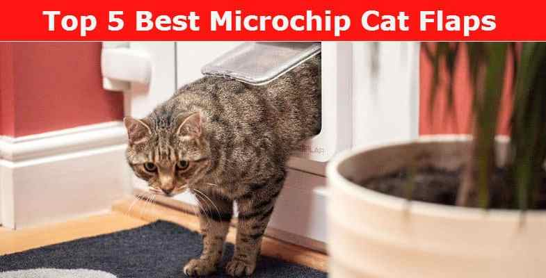 Microchip Cat Flap Reviews – We compare 6 of the best microchip cat flaps