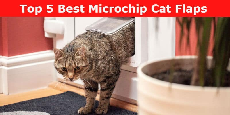 microchip cat flap reviews for 2017  we  pare 6 of the