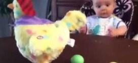 فيديو: طفل رضيع متحمّس لمشاهدة دجاجة تبيض !