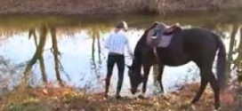 شاهد : ماذا يفعل حصان يدخل الماء لأول مره !