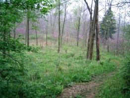 Even prettier is the reforested trail down to the Whitewater River Falls.