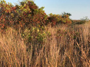 Sandy Hook has pretty dunes