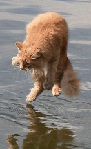 qltl-chat-eau