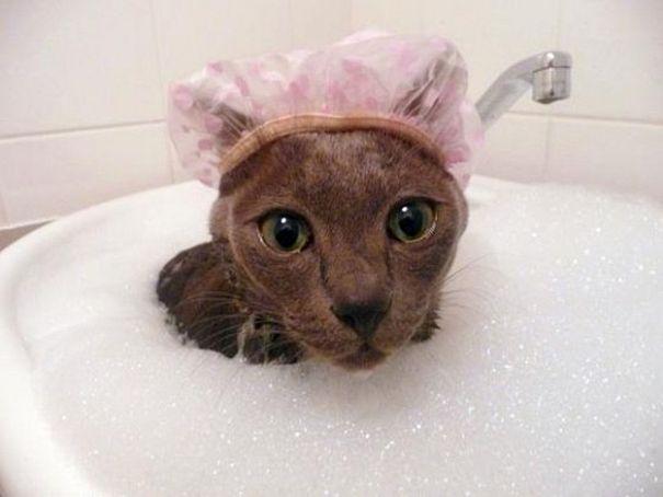 Картинки по запросу חתולים מצחיקים