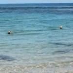 فيديو : كلب يهاجم سمكة قرش